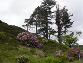 Hillside scene from Skye